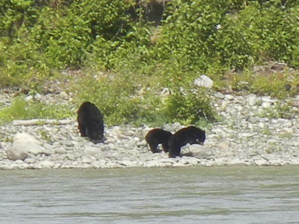 a bear with 2 cubs